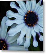 Purple And White Metal Print