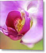 Purple And White Orchid 2 Metal Print
