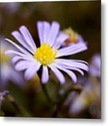 Purple And Yellow Flower Metal Print