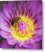 Purple And Yellow Lotus With A Bee Textured Metal Print