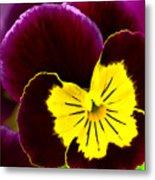 Purple And Yellow Pansy Metal Print
