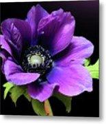 Purple Anemone Flower Metal Print