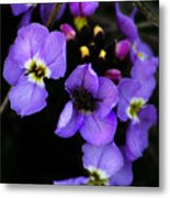 Purple Arctic Wild Flowers Metal Print