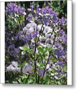 Purple Azaelas Metal Print