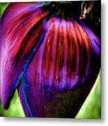Purple Banana Pod Metal Print