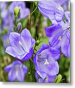 Purple Bell Flowers Metal Print