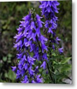 Purple Bell Flowers Metal Print