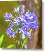 Purple Bells And Blossoms Metal Print