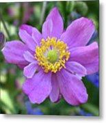 Purple Blossom 1 Metal Print