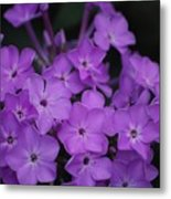 Purple Blossoms Metal Print