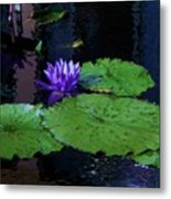 Purple Blue  Lily Metal Print