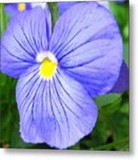 Purple Blue Pansey Metal Print