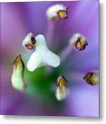 Purple Botanical Metal Print by Frank Tschakert