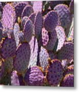 Purple Cacti Metal Print