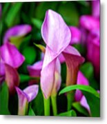 Purple Calla Lilies Metal Print