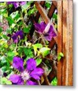 Purple Clematis On Trellis Metal Print
