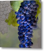 Purple Cluster Metal Print