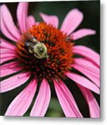 Purple Cone Flower 3 Metal Print