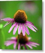 Purple Cone Flower Metal Print
