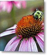 Purple Cone Flower And Bee Metal Print