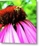Purple Cone Flower Metal Print by Maria Massimiano