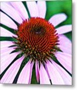 Purple Coneflower Close-up Metal Print
