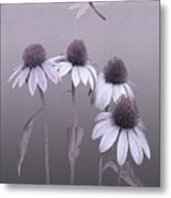 Purple Coneflowers And Dragonfly Metal Print