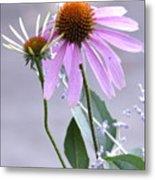 Purple Cornflowers Metal Print