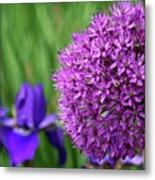 Purple Cotton Ball Metal Print