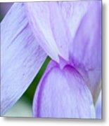 Purple Crocus 3 Metal Print