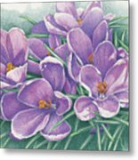 Purple Crocus Metal Print