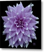 Purple Dahlia Cutout Metal Print