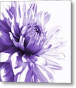 Purple Dahlia Floral Metal Print