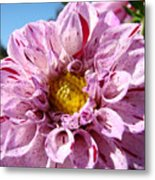 Purple Dahlia Flowers Pink Floral Art Prints Canvas Garden Baslee Troutman Metal Print