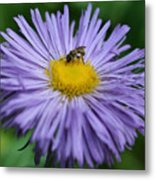 Purple Daisy And Guest Metal Print