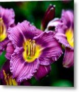 Purple Day Lillies Metal Print