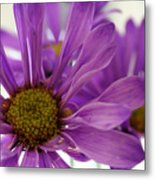 Purple Delight Metal Print