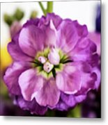 Purple Delphinium Metal Print