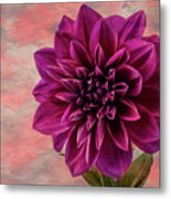 Purple Dhalia Metal Print