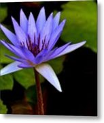 Purple Enchantment 6 Metal Print