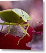 Purple Eyed Green Stink Bug Metal Print