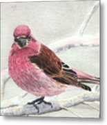 Purple Finch Metal Print