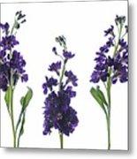Purple Floral 2 Metal Print