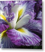 Purple Flower 1 Metal Print