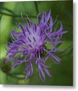 Purple Flower 8 Metal Print