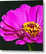 Purple Flower Close Up Metal Print