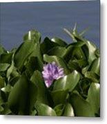 Purple Flower On Bayou Metal Print