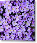 Purple Flowers - Rockcress Metal Print