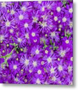 Purple Flowers Metal Print by Frank Tschakert