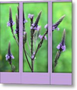 Purple Flowers Through A Window Metal Print